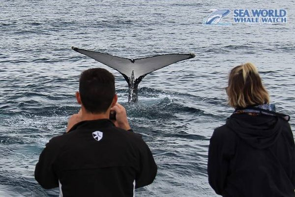 Taking photos of whales