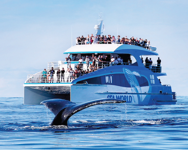 Spirit of Migaloo II Boat with whale