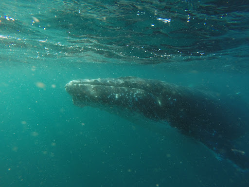 Why do some people find whale songs to be relaxing?